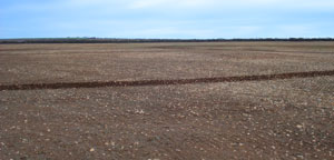 2008 trial site with deep and stony soils